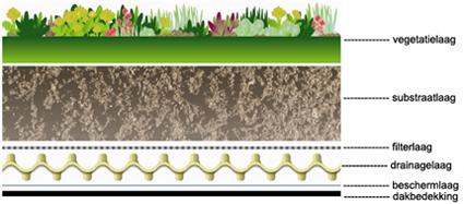 Sedum, Groendaken, Kantoorbeplanting