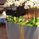 cubico_kunstzijde_orchidee