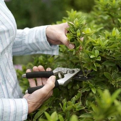 Onderhoud, Kantoorplanten, Kantoorbeplanting