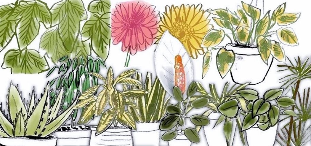 De plant van de maand